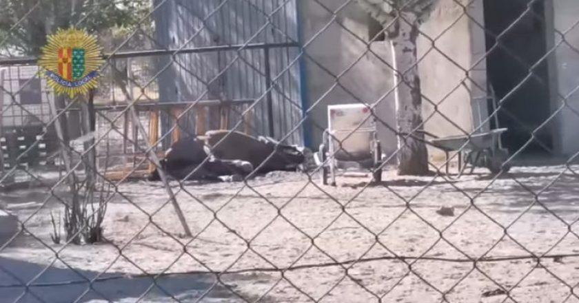 animales-yegua