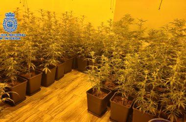 marihuana Getafe